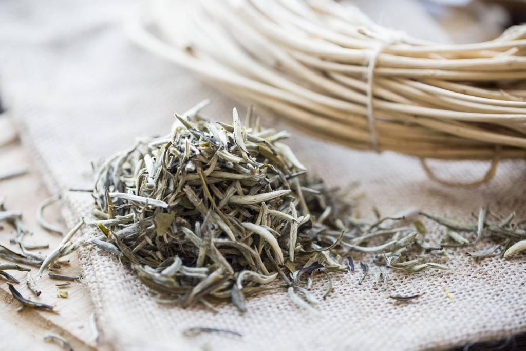 Польза и вред белого чая для организма человека