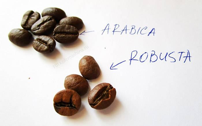 Робуста - что это за разновидность кофейных зерен, свойства, преимущества, недостатки и цена