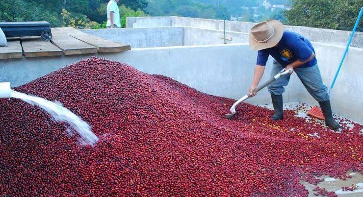 Основные и альтернативные способы обработки кофейных зерен