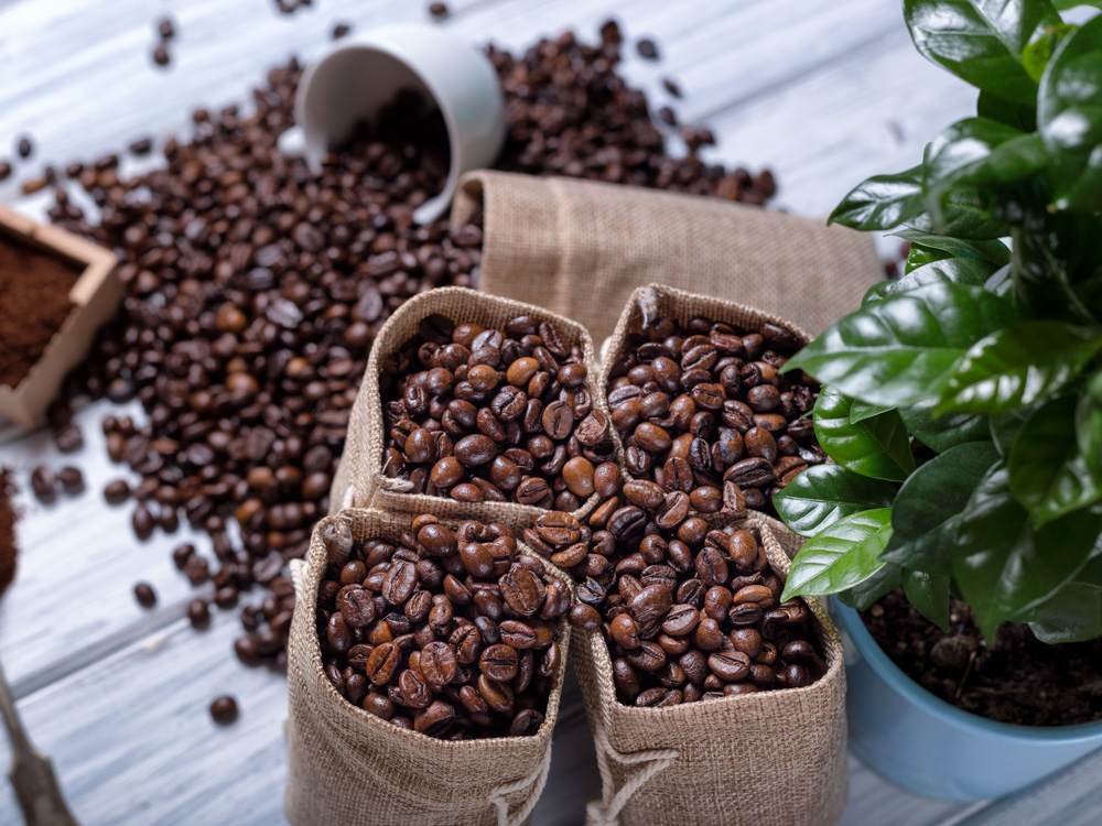 Виды кофе – обзорная классификация