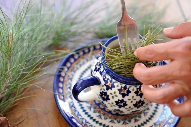 Лечебные свойства сосновых иголок