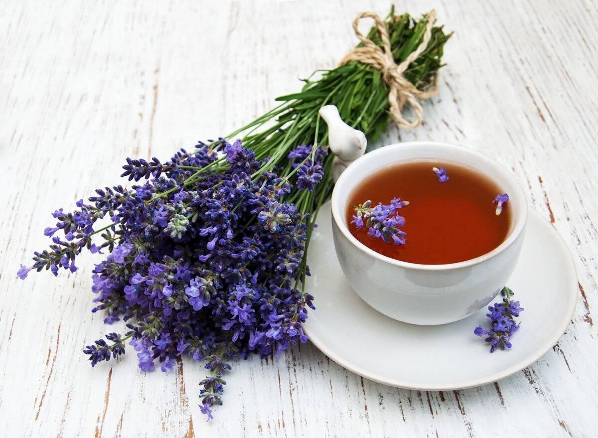 Гвоздика (пряность): полезные свойства и противопоказания, рецепты для дома | здорова и красива