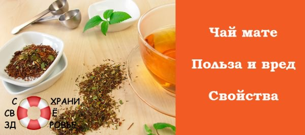 Чай мате: состав, польза и вред напитка