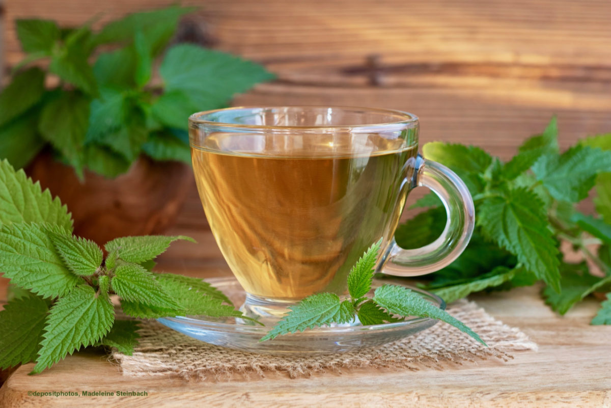 крапива пить чай