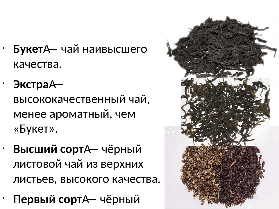 Основные виды чая: классификация и свойства