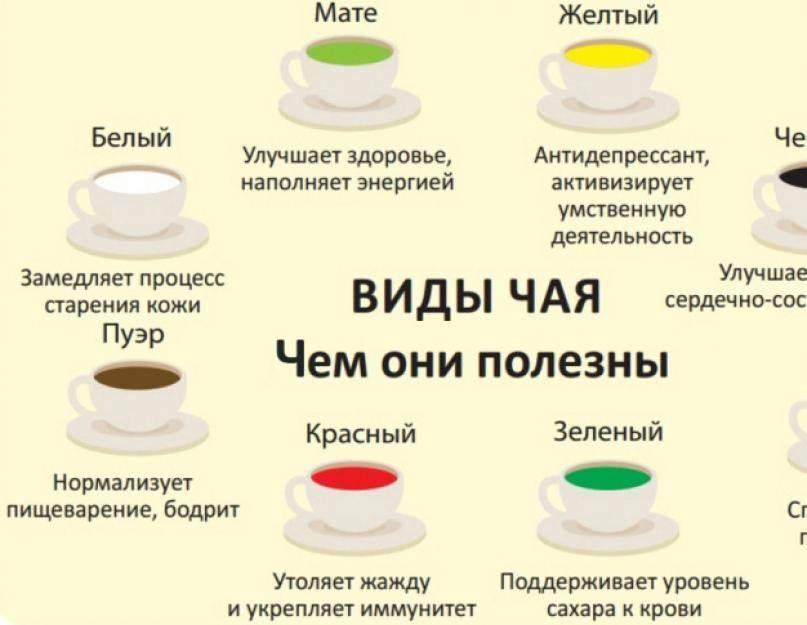 Зеленый чай. стройность в каждой чашке