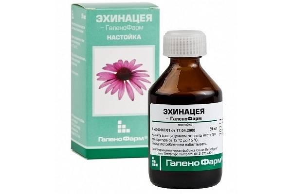 Чай из эхинацеи для поднятия иммунитета и лечения простудных заболеваний