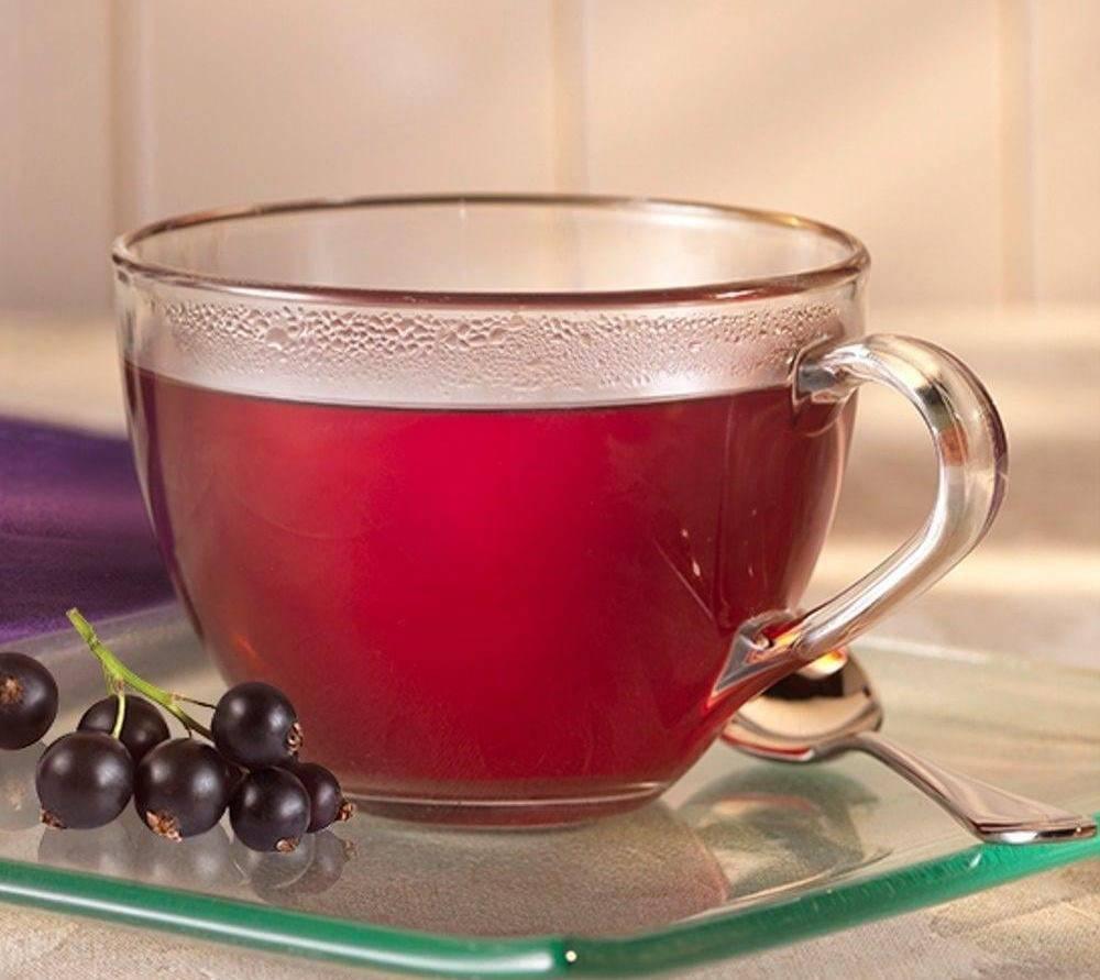 Чай из листьев смородины - польза и вред, заготовка на зиму