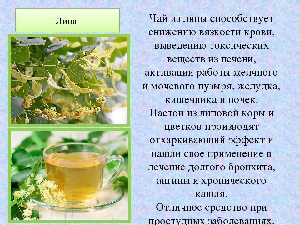 Что такое стевия, в чем польза и вред растения, как употреблять подсластитель