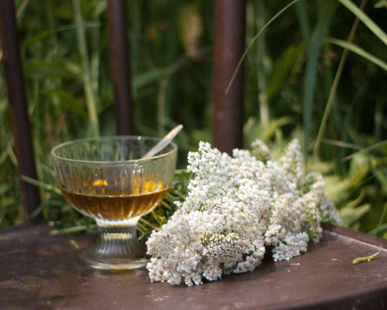 Чем полезен тысячелистник? свойства, рецепты применения и противопоказания травы | здорова и красива