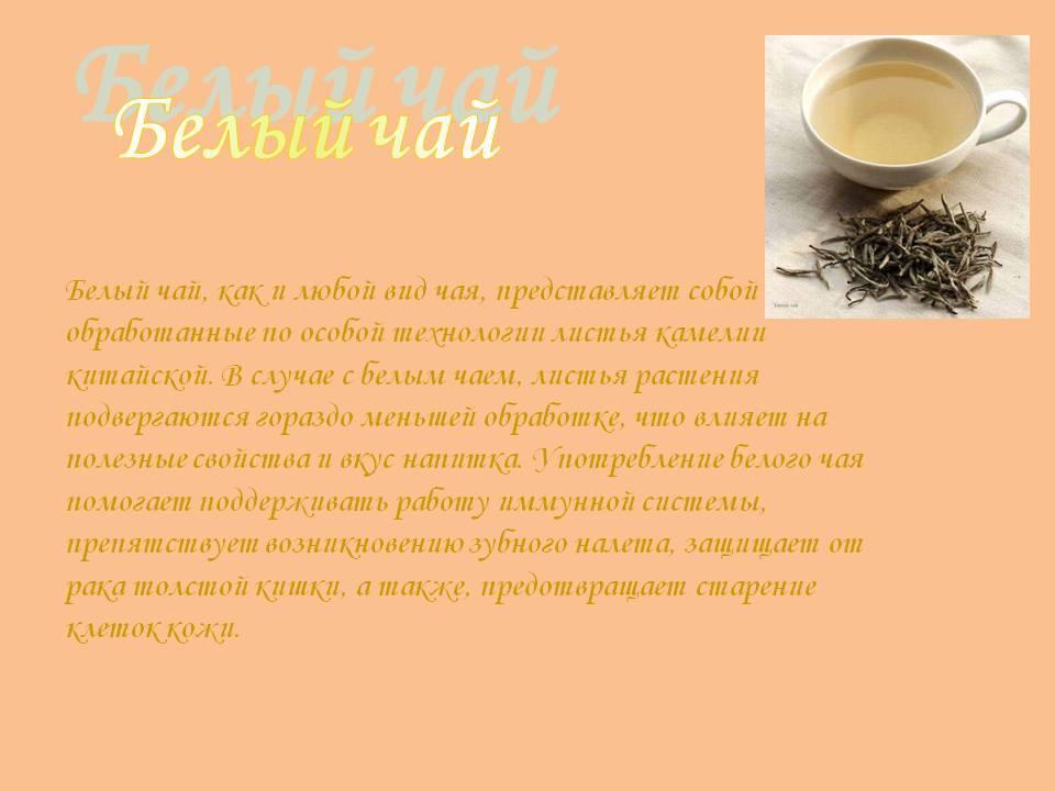 Белый чай: что это такое, польза и вред, чем он полезен, свойства