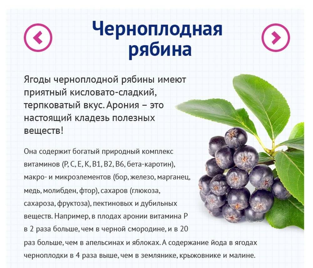 Черемуха обыкновенная: применение выращивание