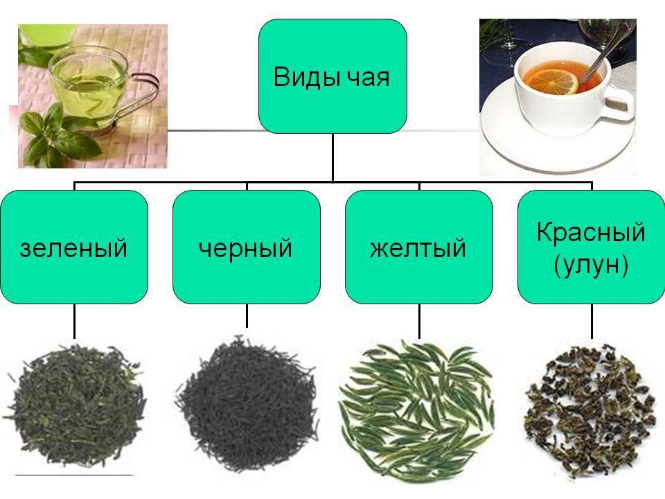 Чем черный чай отличается от зеленого?