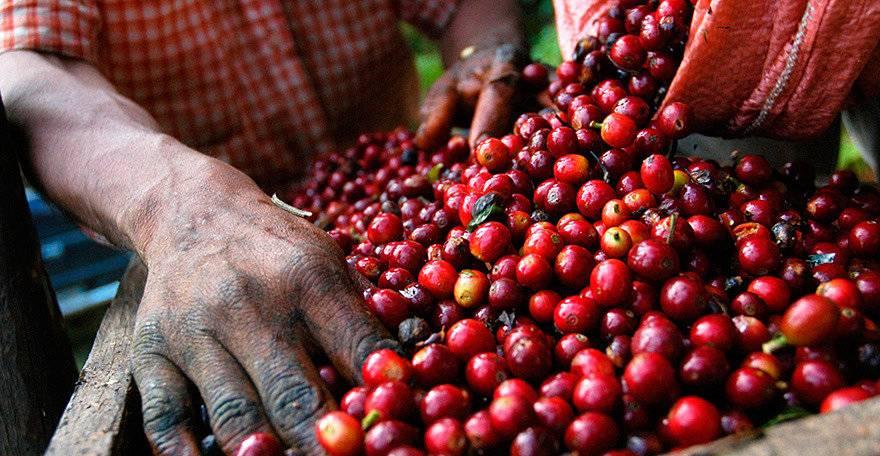 Экономика кот-д`ивуара: промышленность, сельское хозяйство, внешняя торговля