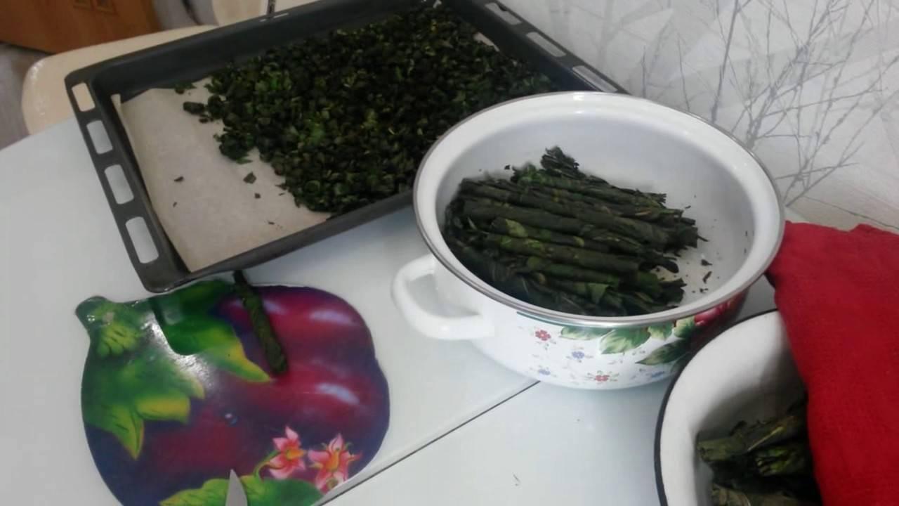 Как сушить иван-чай в домашних условиях для эффективного применения?