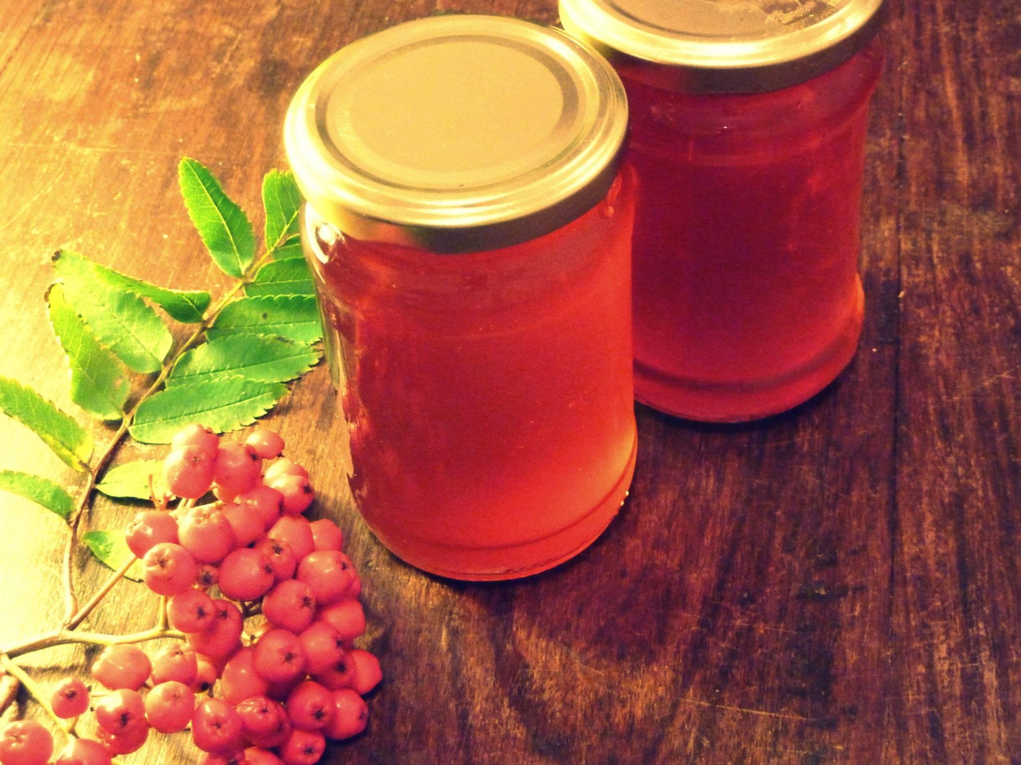 Рябина красная полезные свойства и рецепты на зиму — траварт