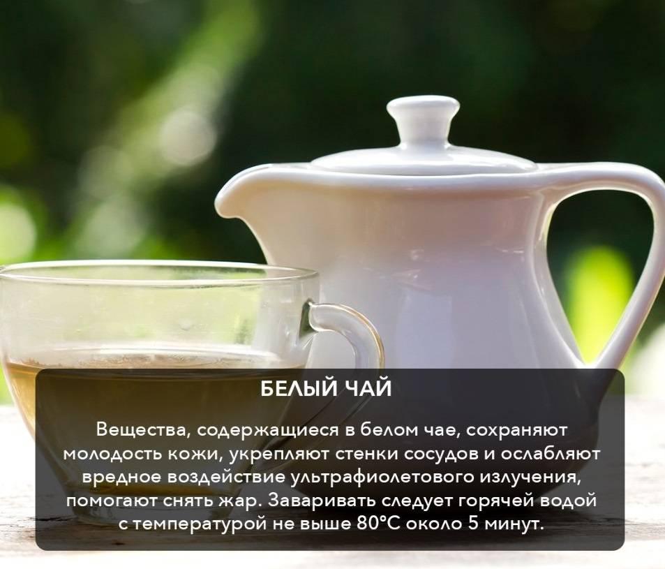 Белый чай. польза и вред. как заварить. фото