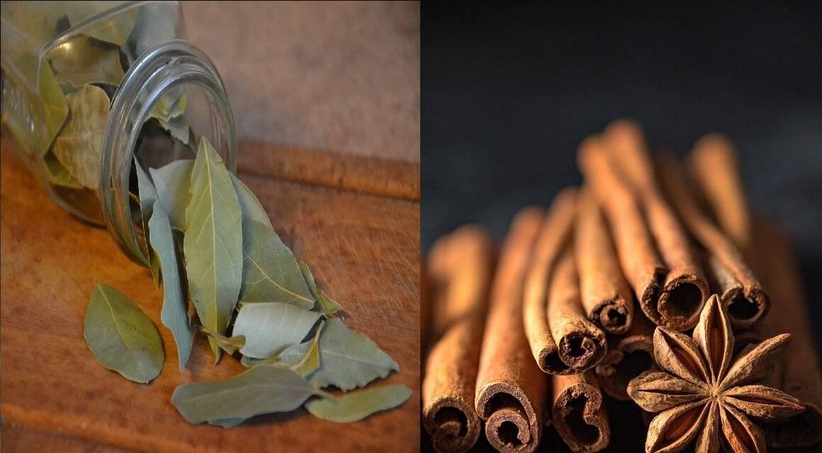 Лавровые листья для похудения: рецепты отваров и чая, полезные свойства специи, противопоказания к применению