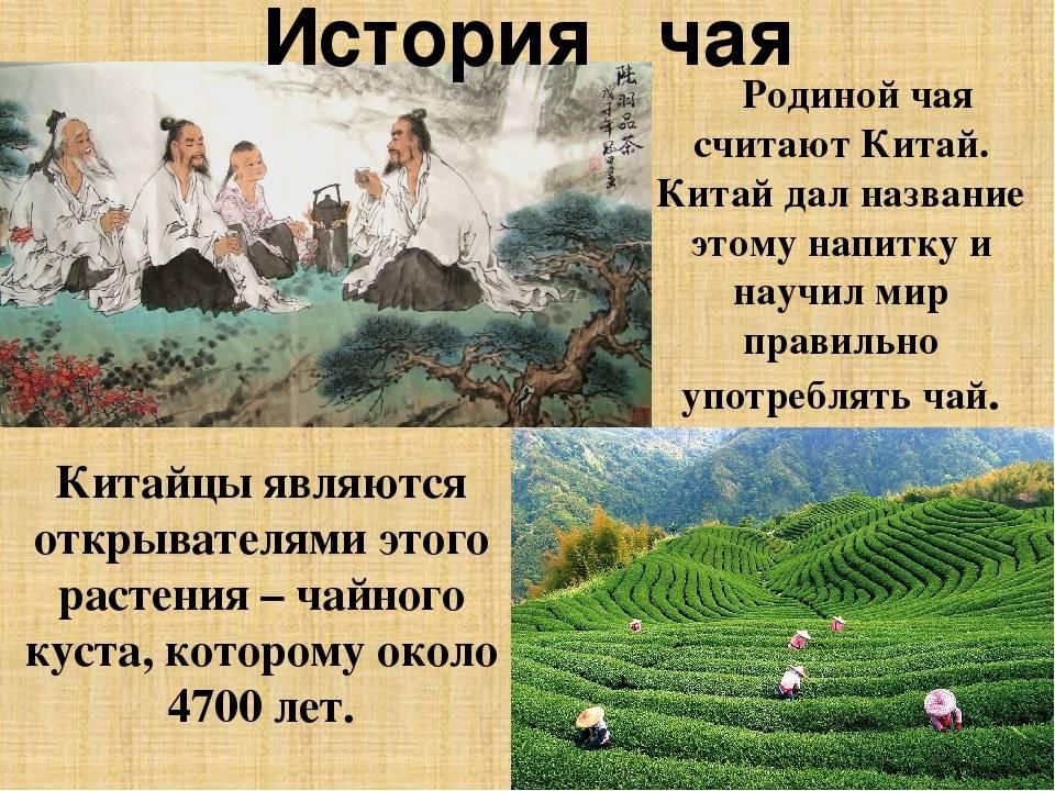История возникновения чая | обучонок