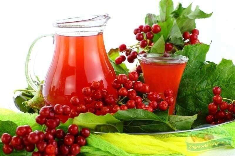 Чай с калиной: польза и вред, как заваривать и как пить