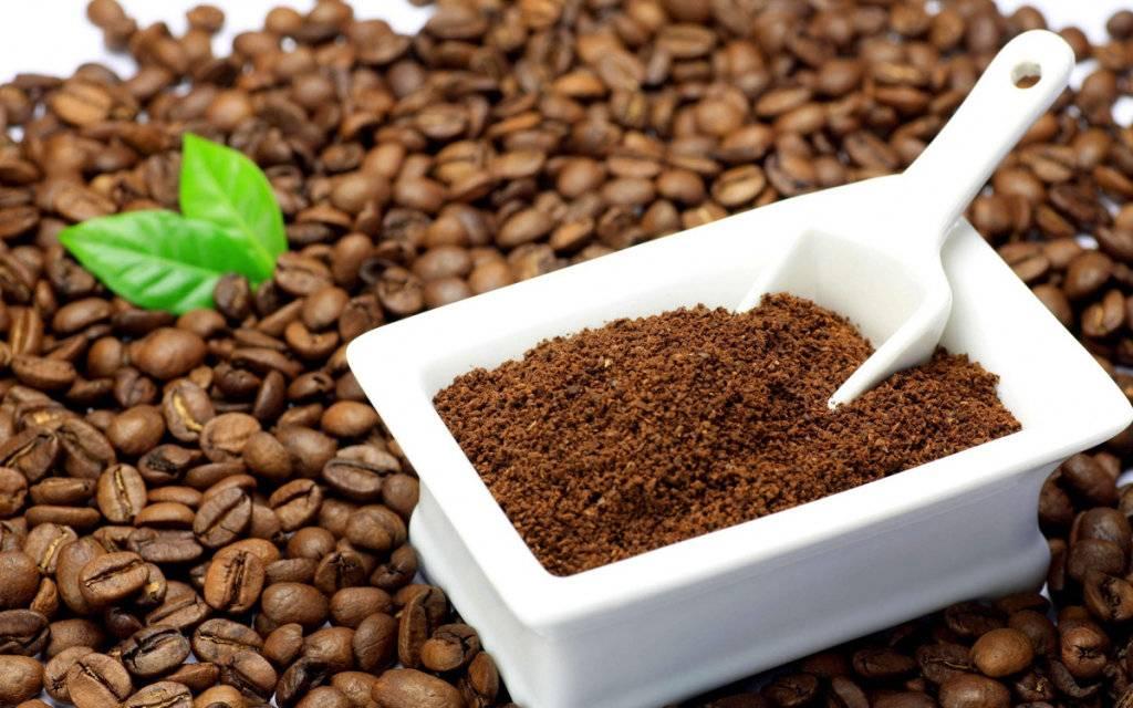 Кофейная гуща как удобрение для комнатных растений: можно ли поливать цветы спитым кофе и удобрять жмыхом? какие растения это любят?