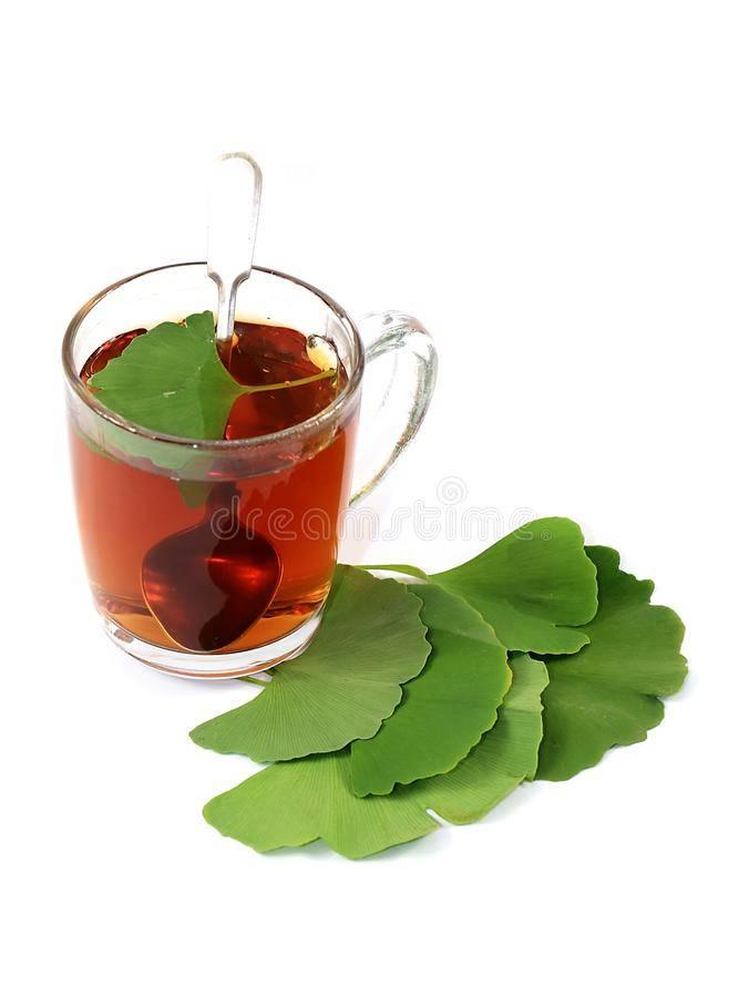 Чай кудин: польза и вред, советы врачей, как заваривать и пить чай