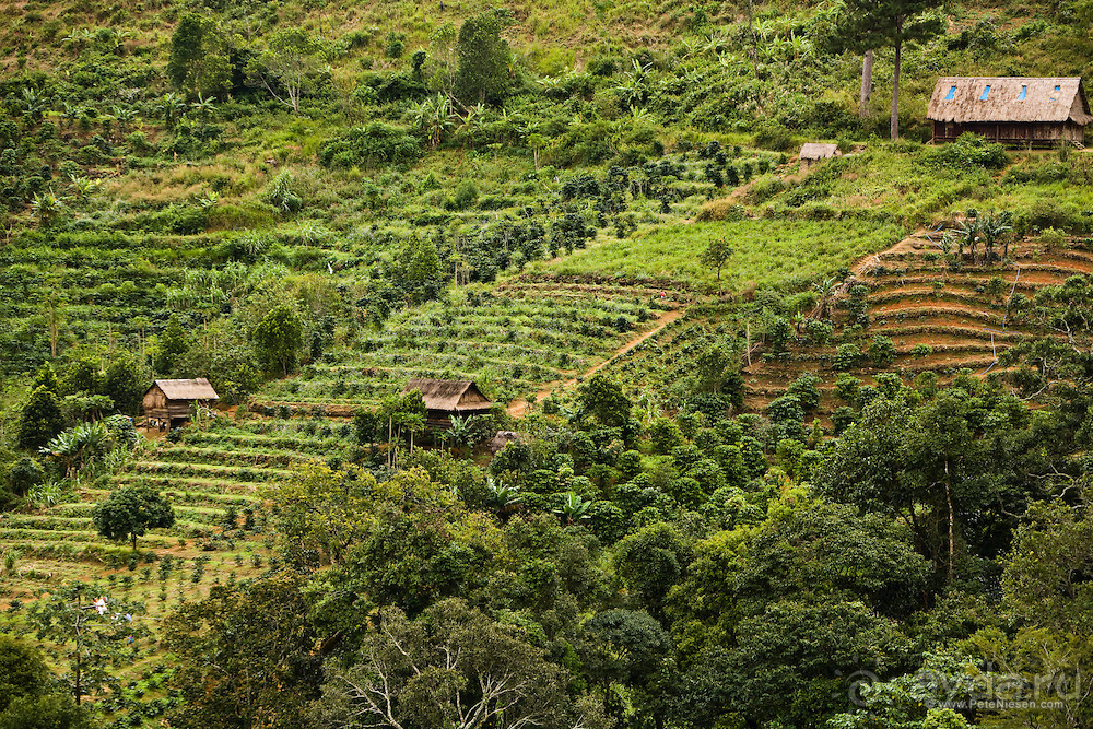 Вьетнамский кофе: сорта, купажи, стоимость вьетнамского кофе