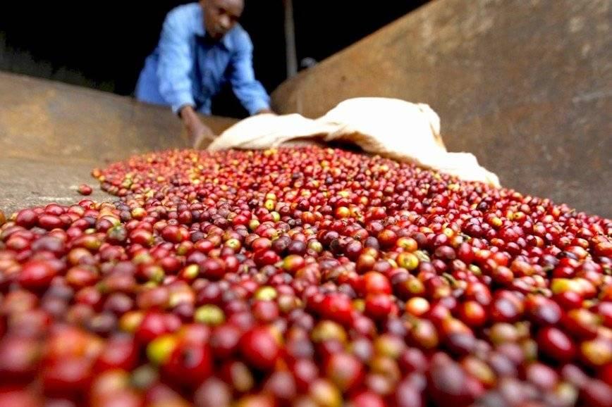 Где выращивают кофе - полный гид по странам - экспортерам