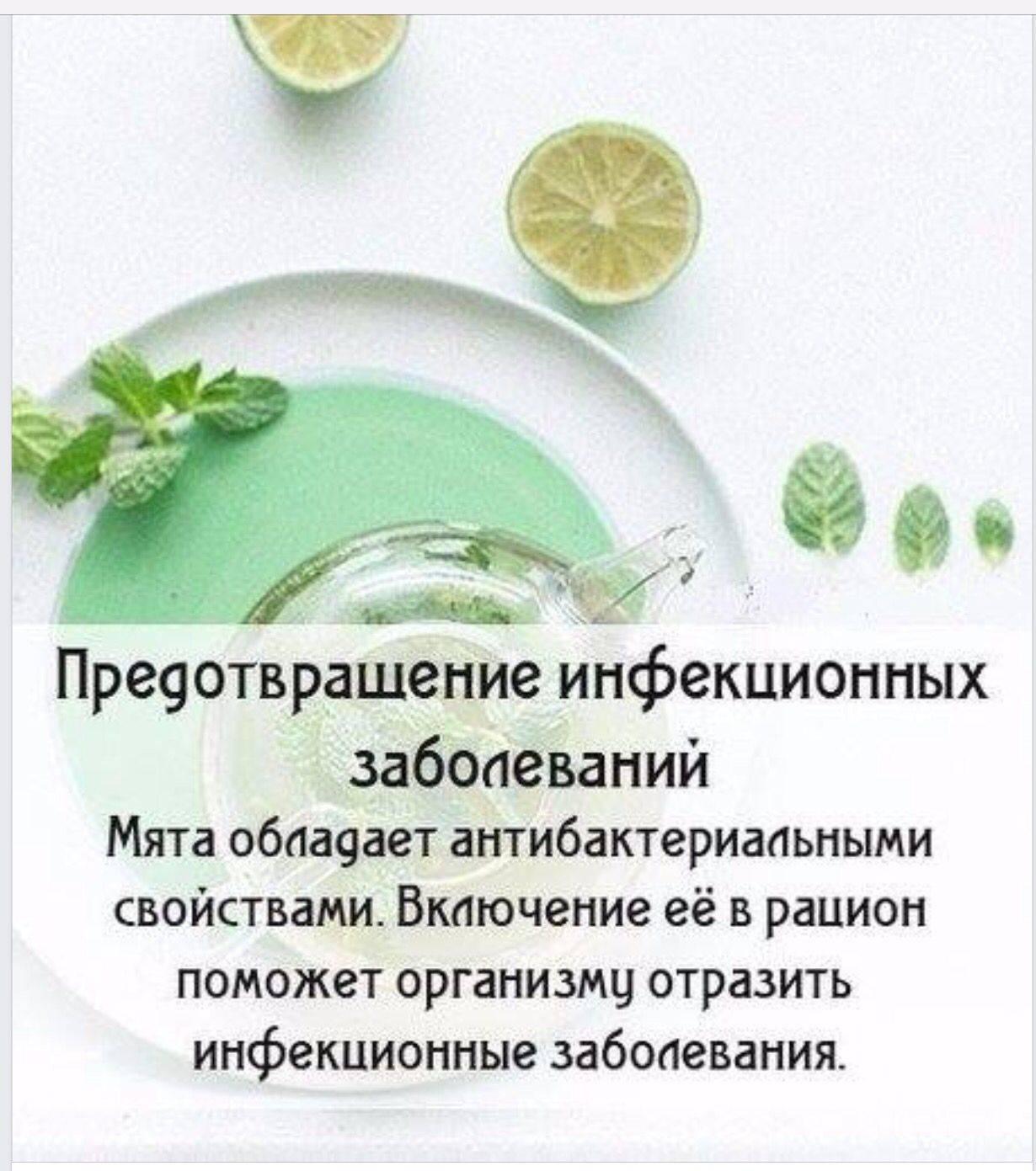 Мелисса при грудном вскармливании: можно ли пить чай с травой и мятой в период лактации, каковы противопоказания при гв и какие еще есть способы применения? русский фермер