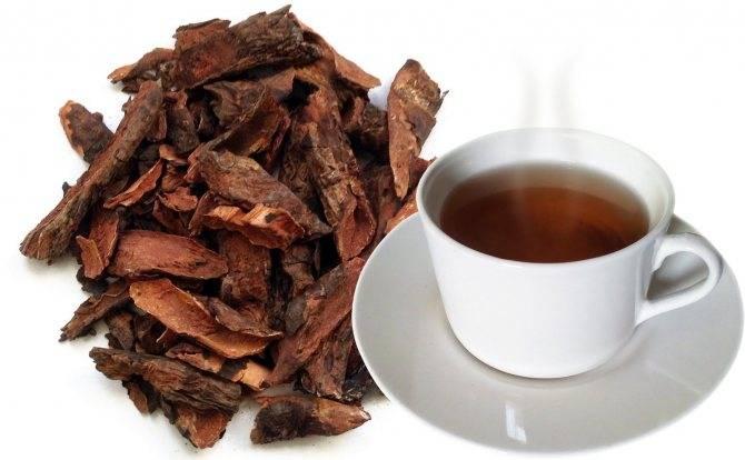 Бадан чай (чигирский чай): лечебные свойства, как заваривать и употреблять