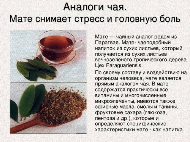 Все о мате — польза парагвайского чая, как его пить и чем отличается он от чая зеленого. какой может быть вред от мате: противопоказания