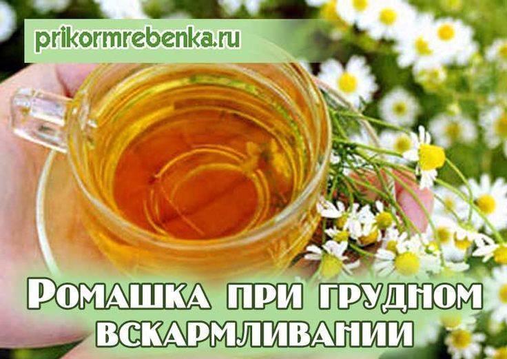 Можно ли беременным пить ромашковый чай?