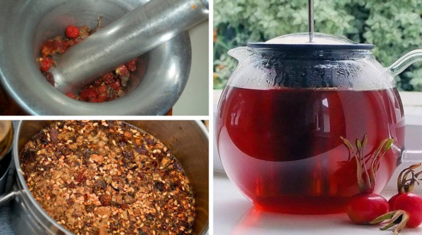 Как заваривать шиповник правильно сушеный, свежий, лучшие рецепты