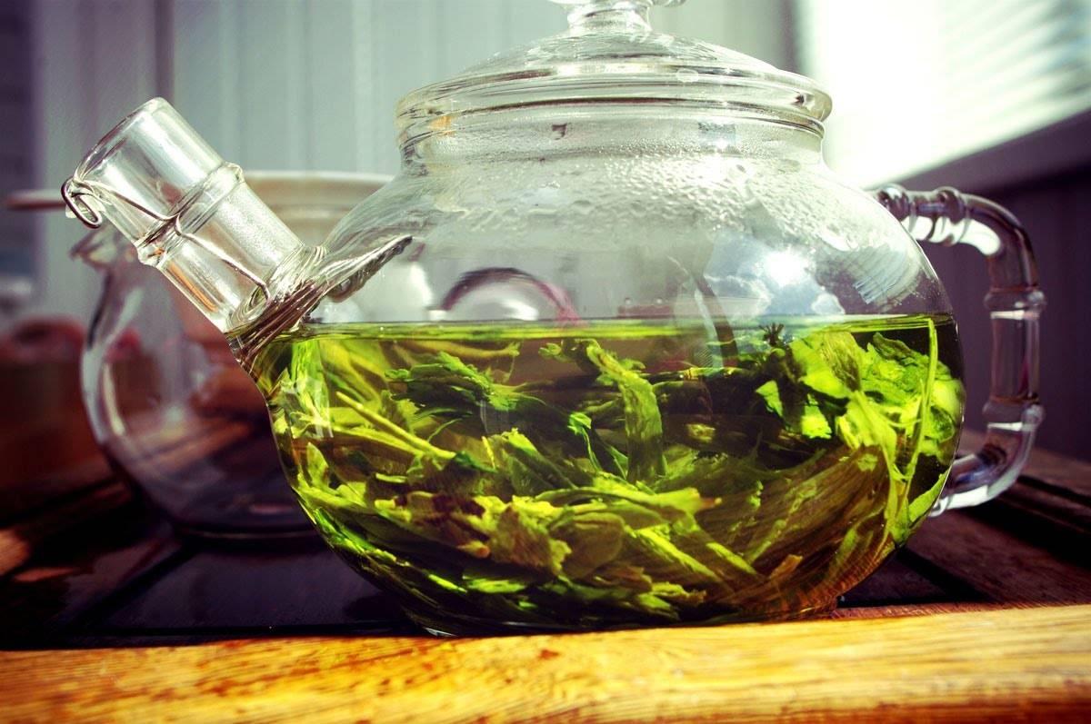 Зеленый чай. польза и вред. как правильно заваривать и пить зеленый чай. | здоровая жизнь