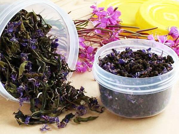 Иван чай(кипрей) — как собирать, сушить и правильно заваривать