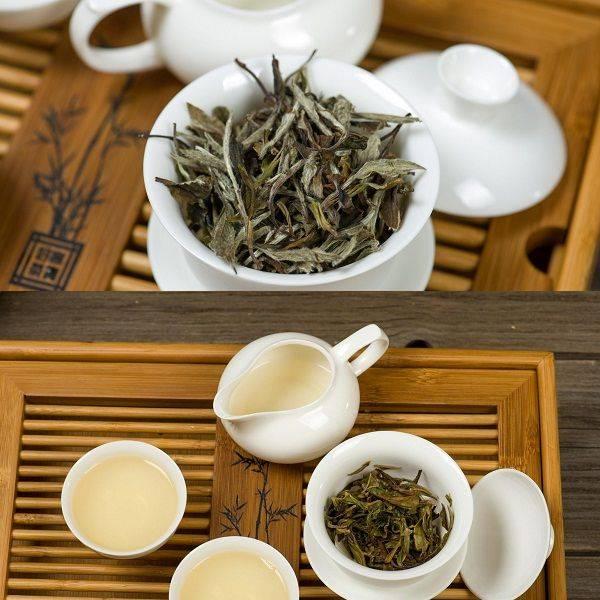 Белый чай - напиток очищающий организм на клеточном уровне