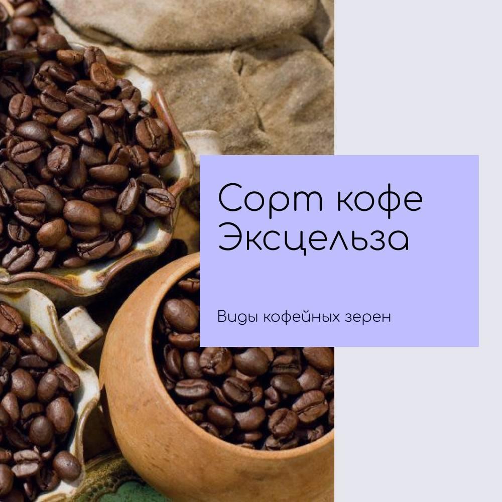 Кофе по-вьетнамски: как заваривать через фильтр, рецепты, процесс приготовления