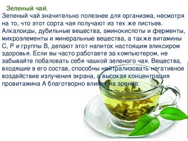 Зеленый чай: лечебные свойства и противопоказания, польза и вред