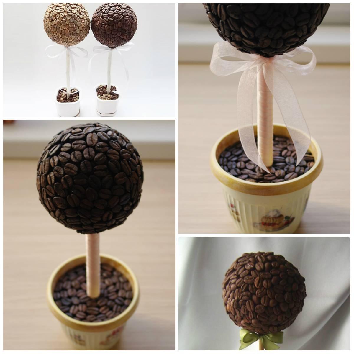 Кофейное дерево- выращивание в домашних условиях, фото и видео