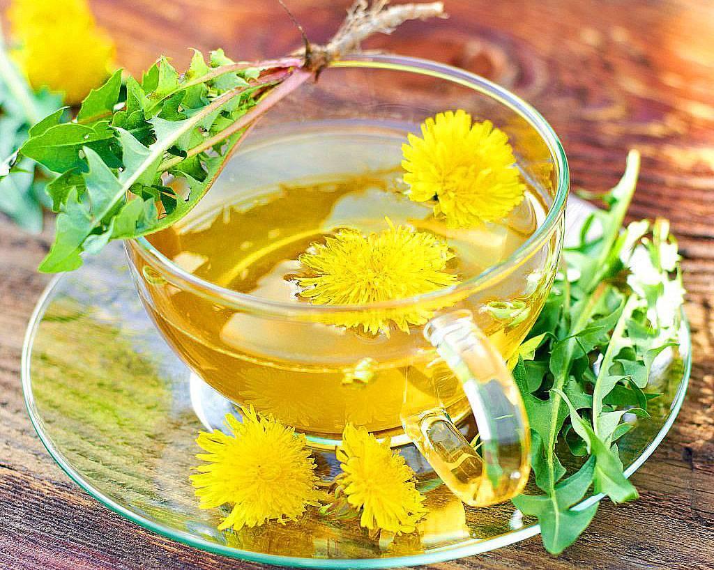 Одуванчик – лечебные свойства и противопоказания