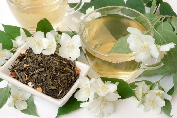 Польза, лечебные свойства и противопоказания к употреблению жасмина
