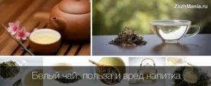 Чай из клевера: польза и вред, противопоказания, как заваривать и принимать