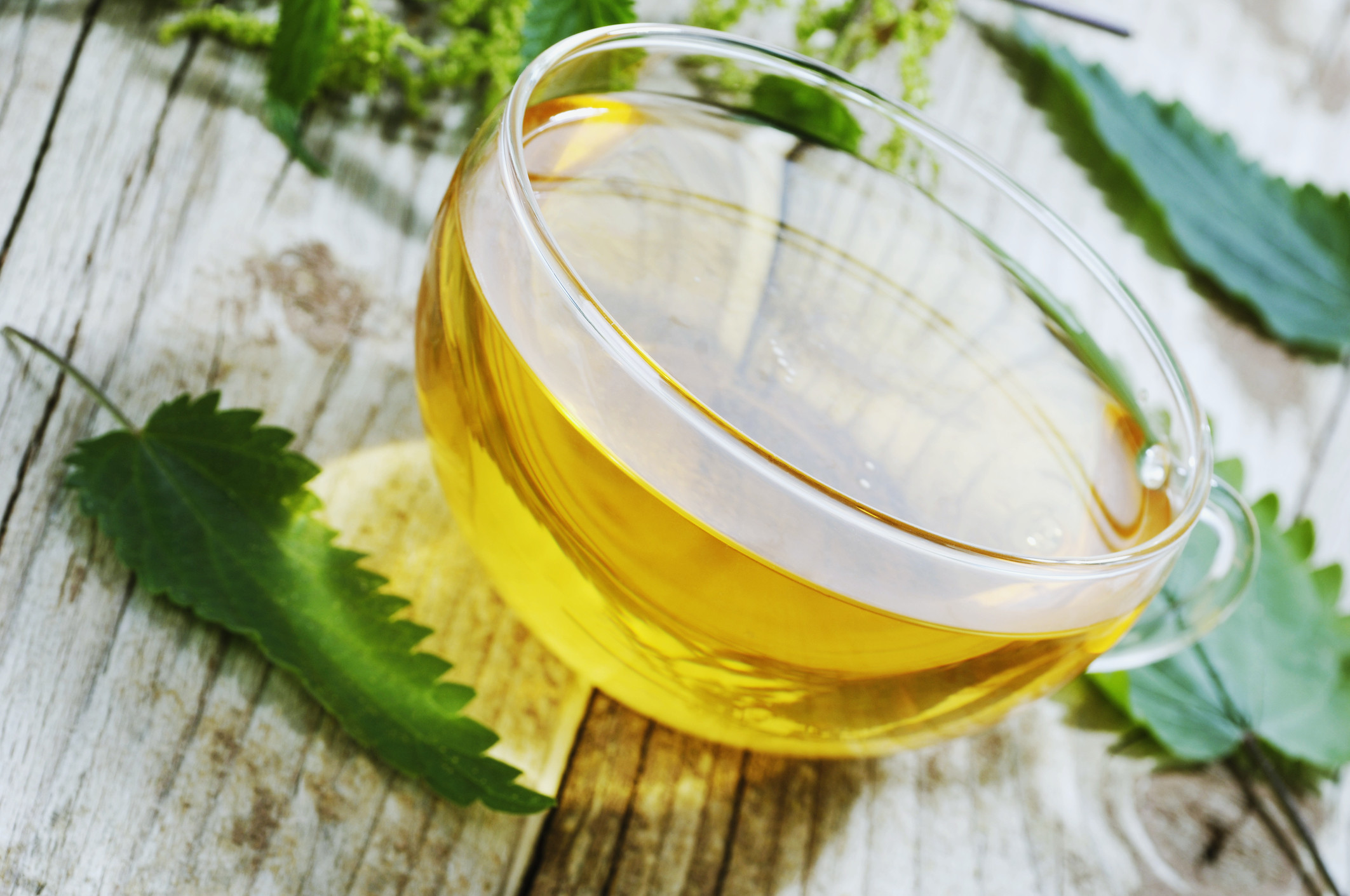 Чай из крапивы: польза и вред, 10 полезных свойств и применение