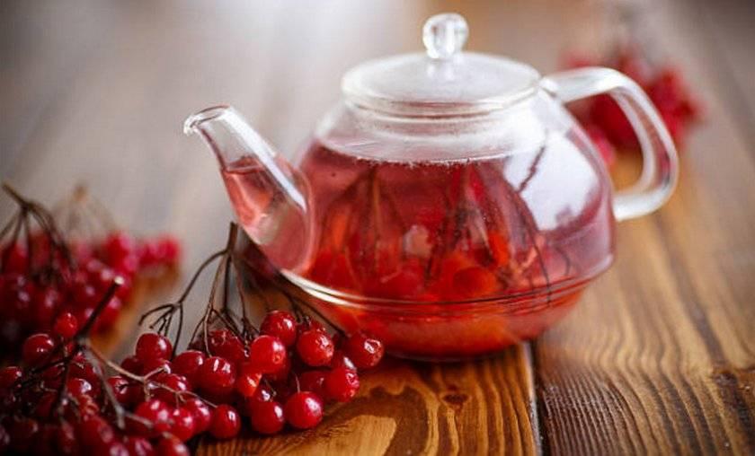 Чай с калиной - полезные свойства, как заваривать