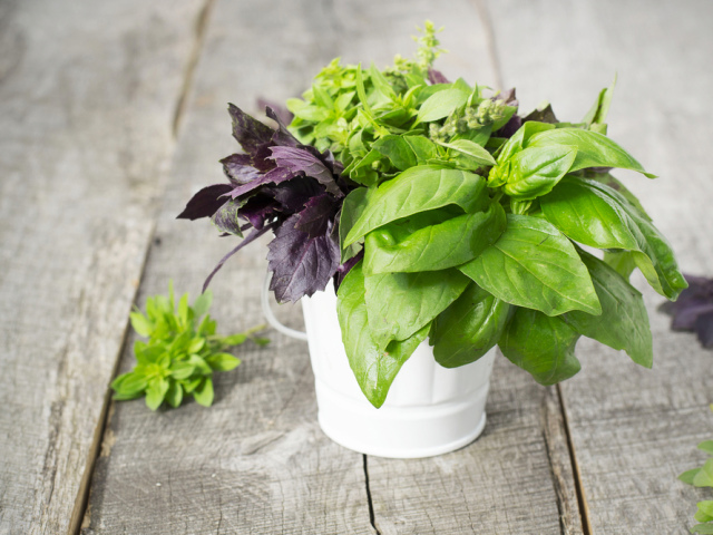 Польза и вред чая с базиликом. рецепты приготовления
