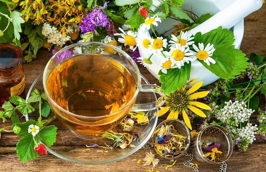 Целебные травы, помогающие от бессонницы: список и рецепты