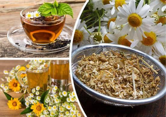 Ромашковый чай - польза и вред для женщин и мужчин