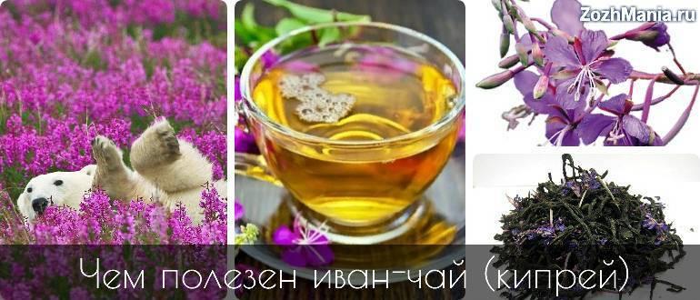 Иван-чай — трава для исцеления половой слабости у мужчин