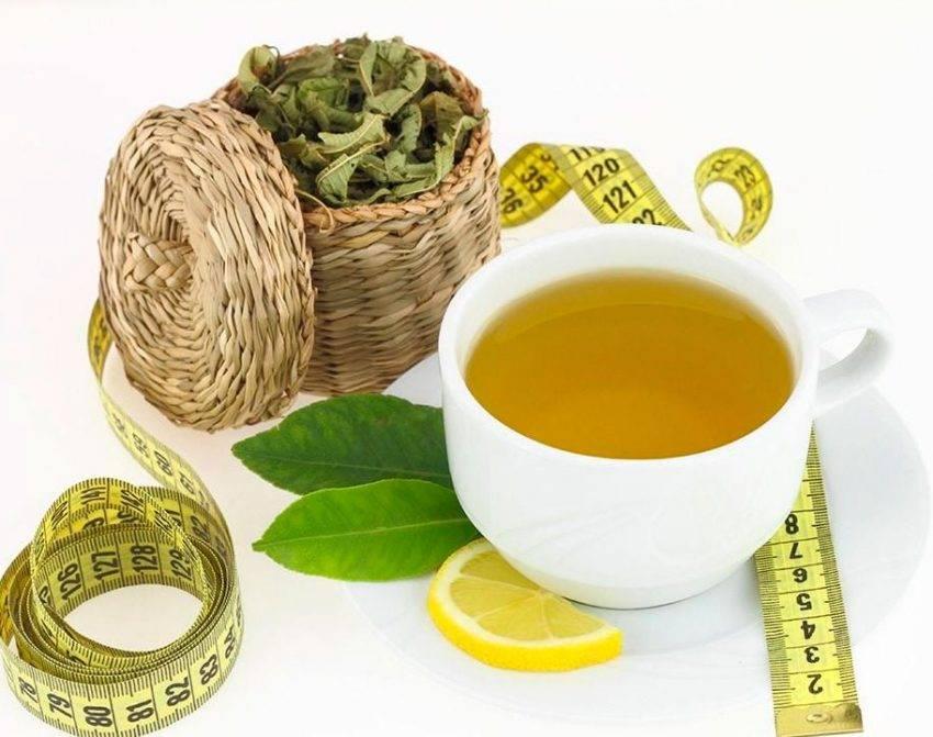 Рецепт приготовления чая для похудения в домашних условиях, отзывы
