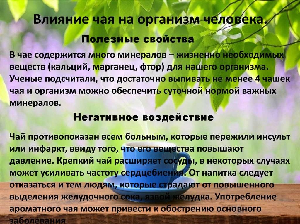 Зеленый чай - польза и вред для организма, свойства, действие напитка и противопоказания к применению
